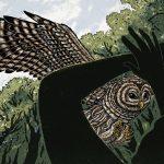 owl-attacks_h