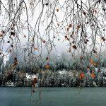 twigs-2941230_1920